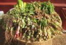 Folk Medicine and Medicinal Plants in Paraguay