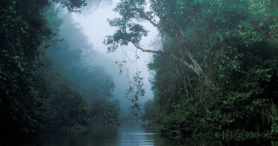 The Forests of Paraguay